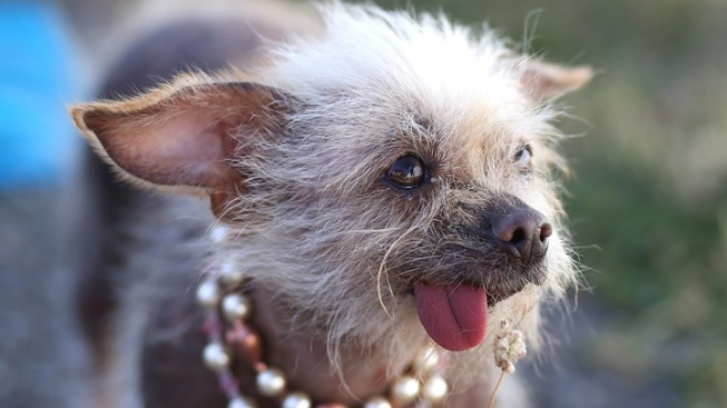World's Ugliest Dog: Time to Vote