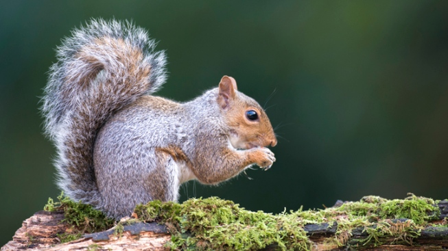 Plague-Infected Squirrel Found Near Campgrounds in Angeles National Forest