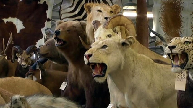 Cops Find Trove of Stolen Taxidermy Specimens