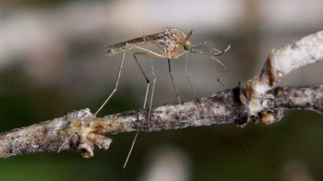 Two Birds Test Positive for West Nile Virus in East Bay