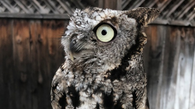 We're Owl About This Wildlife Fundraiser