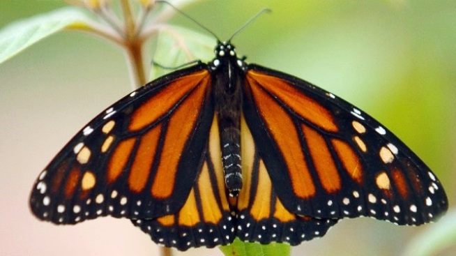 Wrapping Up: That Monarch Moment