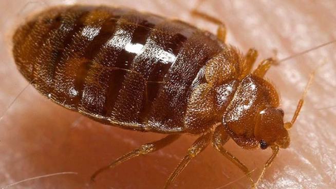 San Francisco To Track Bedbugs' Trails