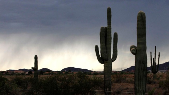 16-Foot Cactus Falls, Pins Man to the Ground