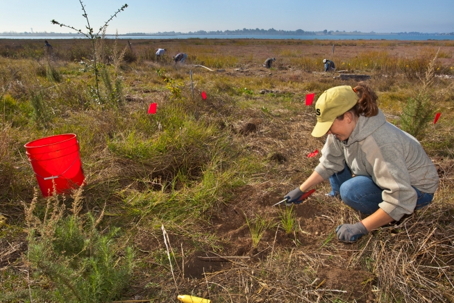 Volunteer at the Martin Luther King Jr. Regional Shoreline Nov 17!