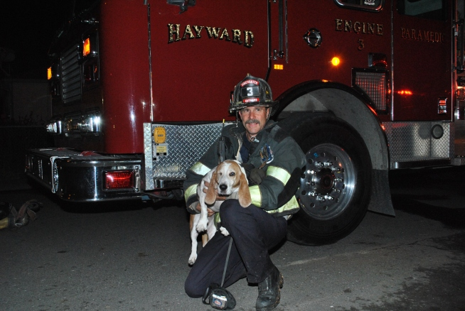 Hayward Firefighters Rescue Basset Hound