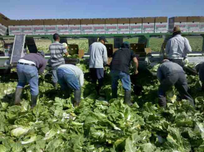 "United Farm Workers Ask Americans to ""Take Our Jobs"""