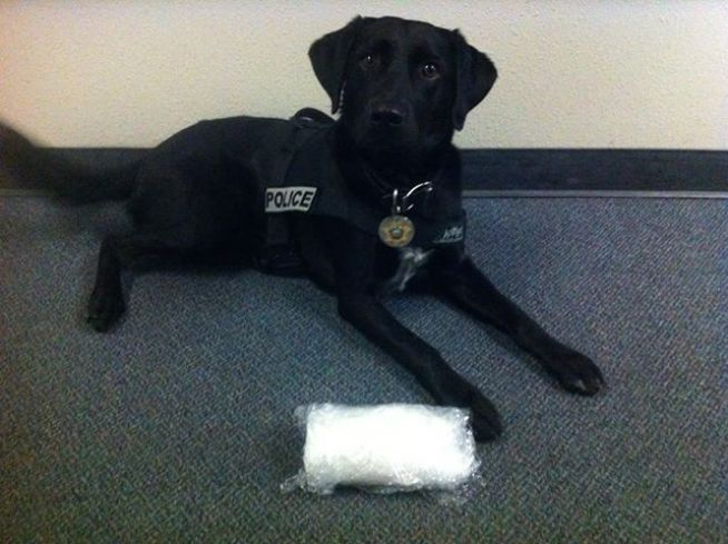 K-9 Sniffs Out Meth in Secret Car Compartment
