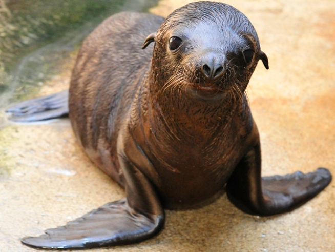Shot Sea Lion Dies