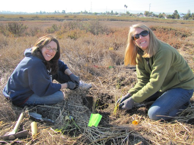 Volunteer at Salt Marsh Harvest Mouse Day Oct 20