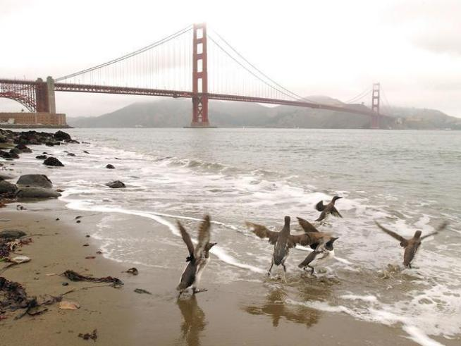 Think the biggest threat to the Bay Area's environmental health is big business? <a title=