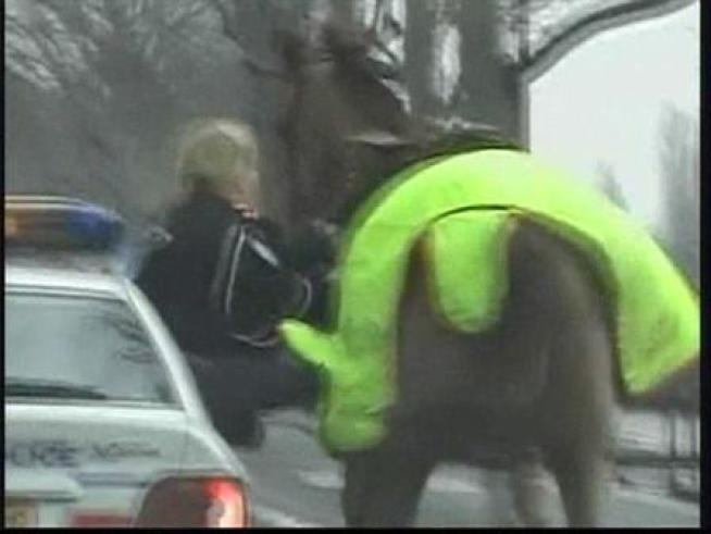 Police say a runaway horse suffered only minor injuries as he ran wildly through the streets of Paris.