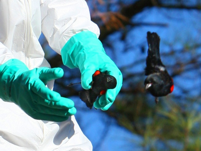 City and state officials are baffled by thousands of dead blackbirds that fell from the sky in Beebe, <a title=