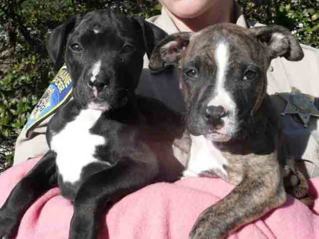 Puppies Found in Monterey County Dumpster