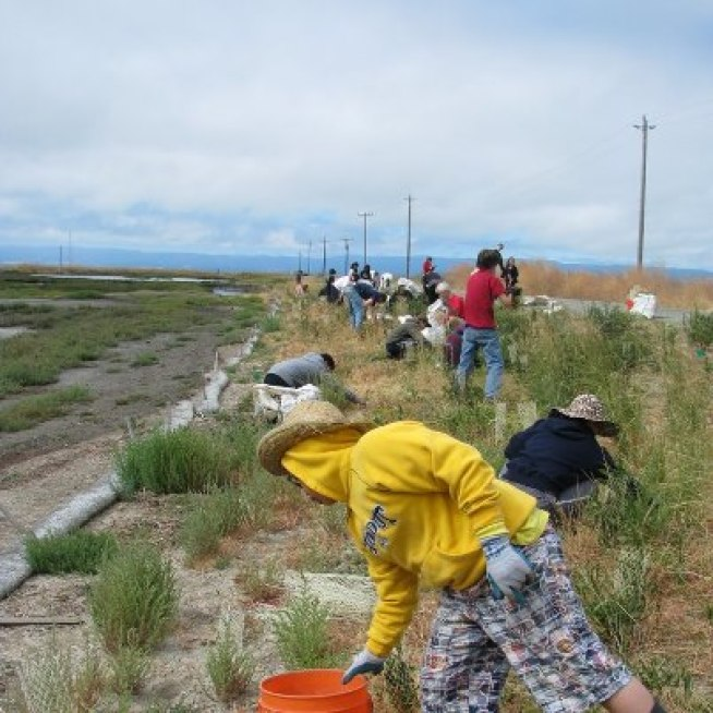Halloweeding at Eden Landing Ecological Reserve Oct 27