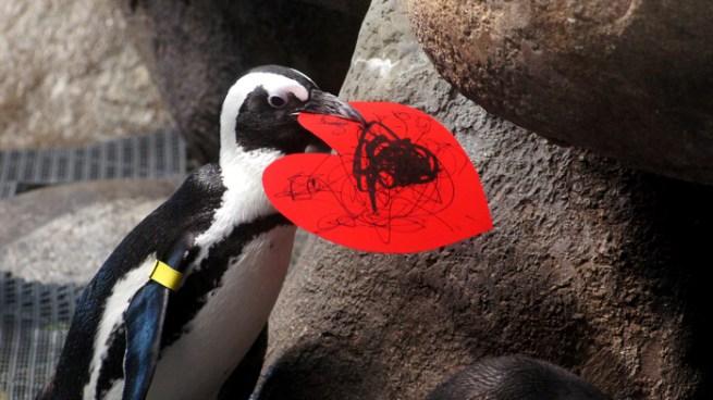 Penguin Valentines