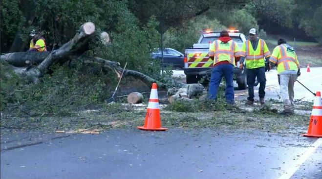 Fallen Tree Removed From Major Road in Lafayette