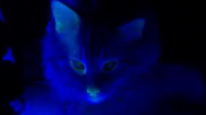 Me-yow! This Cat Glows in the Dark