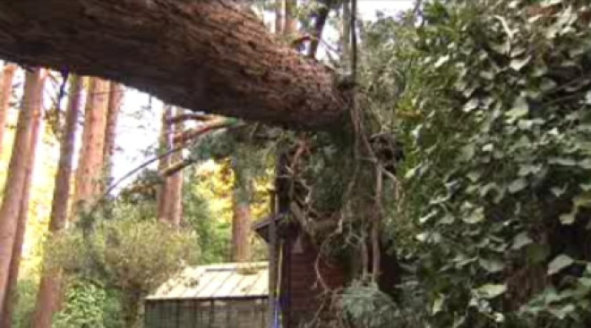 Tree Smashes House in Marin County