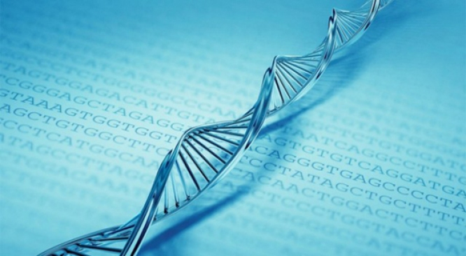 Storing 700TB of Data in One Gram of DNA