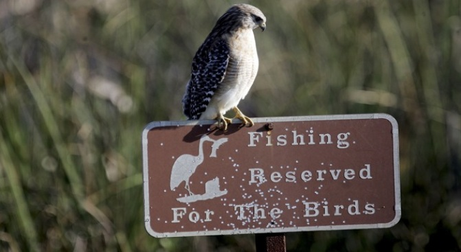 Annual Bay Area Bird Count is Thursday