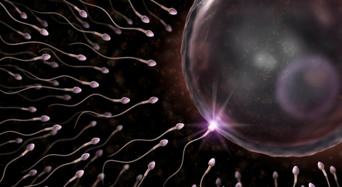 Heart-Stopping Sperm Births New Rules for Donors