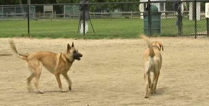 New Program Aimed at Curbing Dog Droppings