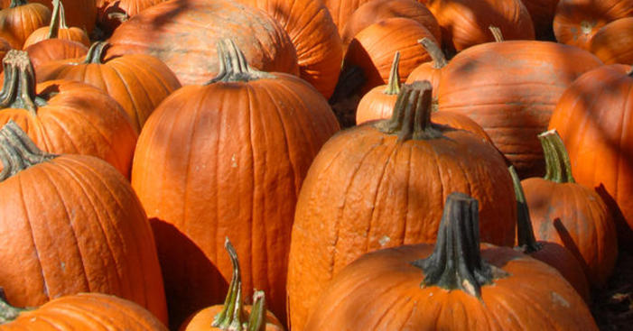 Gilroy's Yummy Pumpkin Passport Contest