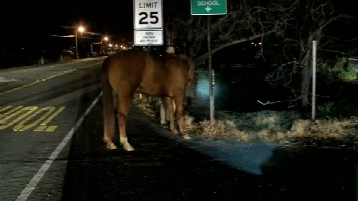 Stray Horses Near Martinez Freeway