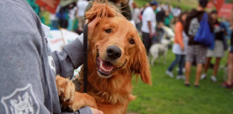 Pets In Need Wags and Whiskers Festival