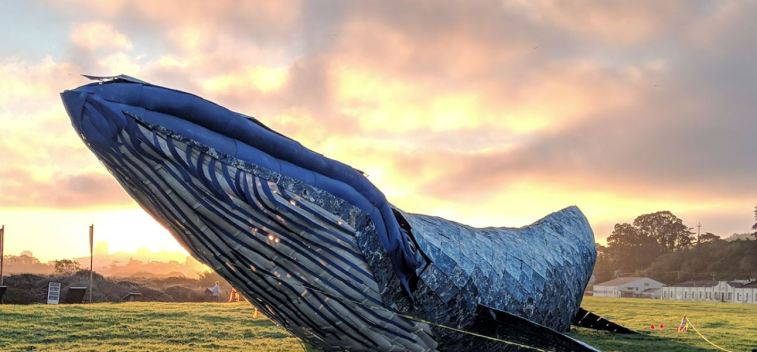 Meet the Whale at Crissy Field