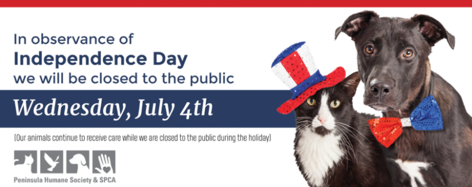Tips to Keep Pets Safe on 4th of July