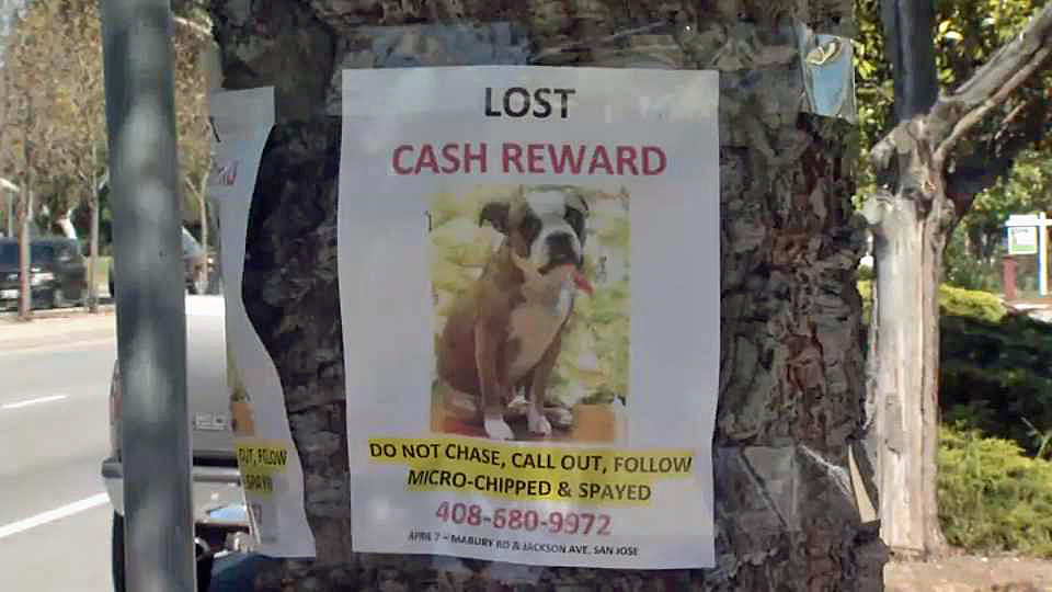 San Jose Family Searches For Dog Believed to be Stolen